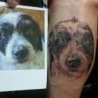dogportrait082016
